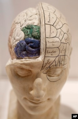 A 19th century model of a head with brain exposed is seen on display at the exhibition 'Brains - The Mind as Matter' at the Wellcome Collection in London, Tuesday, March 27, 2012. (AP Photo/Alastair Grant)