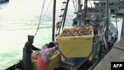 Số lượng thủy sản đánh bắt theo kiểu truyền thống không tăng trung bình hiện nay này là 90 triệu tấn một năm