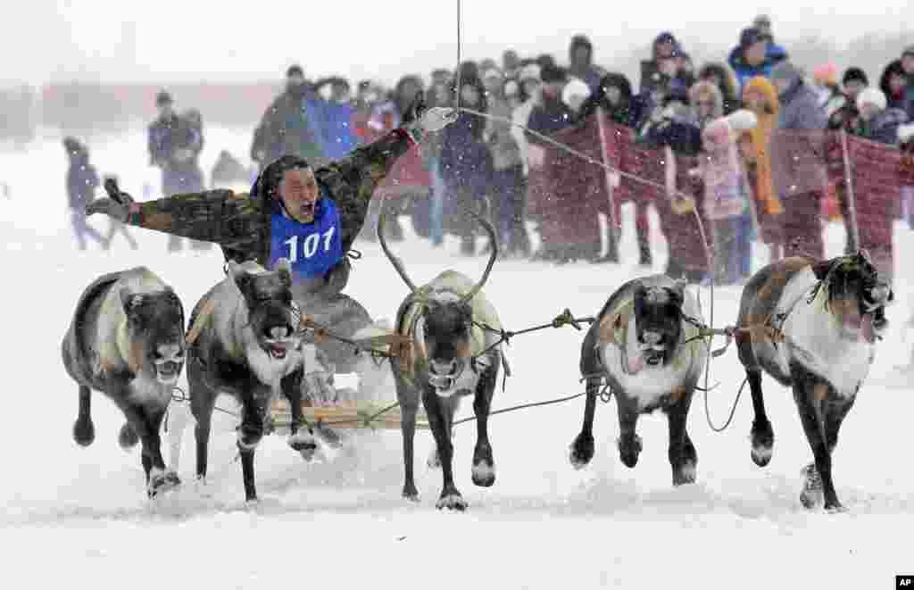Rusiyanın Nadim şəhərində maral yarışları