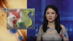 Cúm gia cầm lây lan 22 tỉnh thành Việt Nam