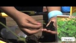 Teaching Young Environmentalists Responsible Behaviors