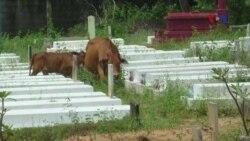 Kêu gọi trùng tu Nghĩa trang Biên Hòa