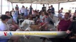 พาน้องหมาล่องเรือชมทิวทัศน์แถบกรุงวอชิงตัน