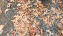 Jesen u Pennsylvaniji
