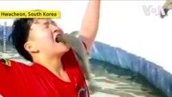 NO COMMENT – Ձկնորսության փառատոն Հարավային Կորեայում