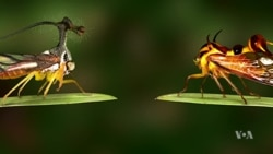 New Film 'Learning to See' Focuses on Insects, Photography