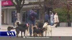 Kosovë, qentë endacakë dhe sulmet e tyre ndaj njerëzve