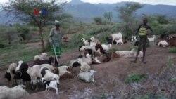 Kawasan Miskin Uganda Terpukul Perubahan Iklim