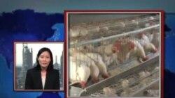 """VOA连线:1)中国爆发禽流感 欧洲国家是否有所警觉和回应2)欧洲如何看待""""中国对非洲援助报告"""""""