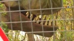"""""""Blackgang Chine"""" parkının dinozavrları"""