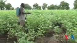 Burkina côri sènè ko
