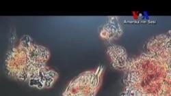 İnsan Vücudundaki Mikrop ve Bakterilerin Haritası Çıkarılıyor
