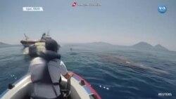 Akdeniz'de Ağlara Takılan Balina Kurtarıldı