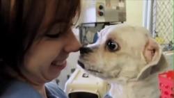 不再是盘中餐:韩国小狗移民美国