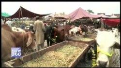 لاہور کی مویشی منڈی، پردیسی بیوپاریوں کی عید