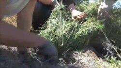 نوجوانان آمريکايی و محافظت از گیاهان بومی