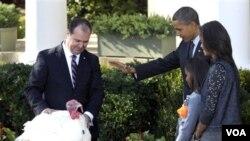 """Presiden Barack Obama dan keluarga mengampuni kalkun bernama """"Apple,"""" di Gedung Putih, Rabu 24 November 2010."""