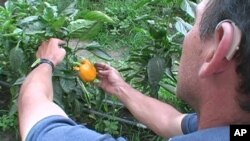 Colombian Scientists Predict Climate Change to Affect Most Food Crops