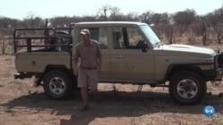 Botswana repatria elefantes para Angola para reduzir a superpopulação