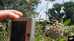 Bee hunters across the US take pictures of pollinators and the plants they pollinate, and then upload them to an online database that keeps track of trends showing the effects of climate change, pollution or invasive species.