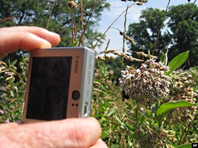 FILE - Bee hunters across the U.S. take pictures of pollinators and the plants they pollinate, and then upload them to an online database that keeps track of trends showing the effects of climate change, pollution or invasive species.
