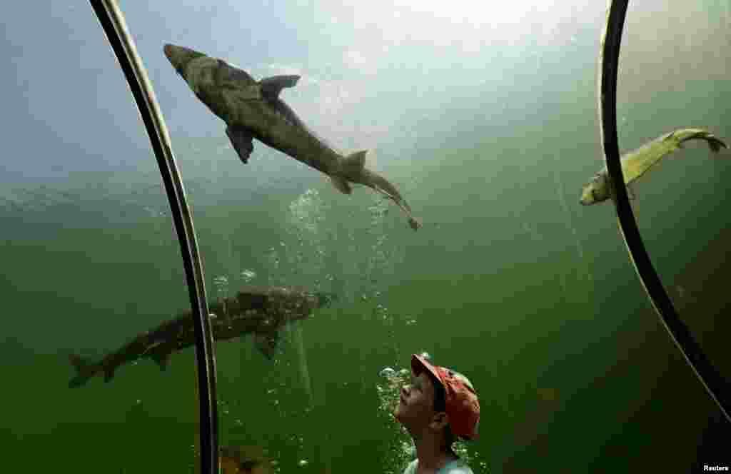 Seorang anak mengamati ikan-ikan dari sebuah ruangan pada terowongan bawah air di desa Modra, Republik Ceko.