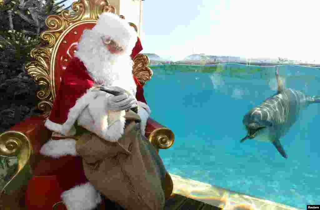 2017年12月22日,法国昂蒂布的海洋动物园附近,一位身穿圣诞老人服装的男子拿着一条鱼,旁边有一只海豚游来游去。