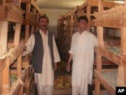 افغانستان کې د وریښمو صنعت وده مومي