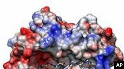 Novas Possibilidades de Uma Vacina Contra a SIDA
