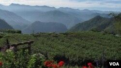 台湾著名景点阿里山(美国之音申华拍摄)