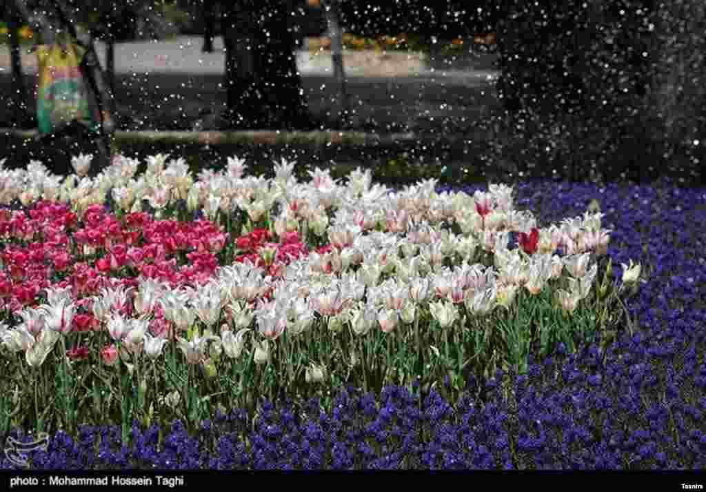 جشنواره گل های داوودی بوستان ملت - مشهد عکس: محمدحسین طاقی