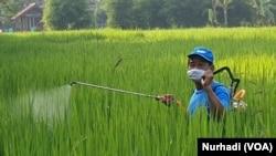 Seorang petani di Sariharjo, Sleman, menyemprot tanaman padi. (Foto:VOA/ Nurhadi)
