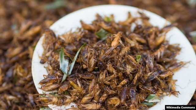Bugs Are The New Food Voa Learning English Food News Newslocker