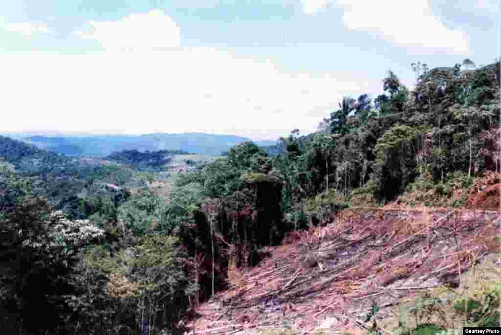 Di Hutan Atlantik di Bahia, kebakaran dan penggundulan di lereng bukit adalah pelanggaran undang-undang namun penegakan hukum tidak efektif. (Foto: Arsip IESB)