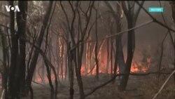 Пожары в Австралии могли нанести непоправимый ущерб растениям и животным континента