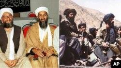 تصمیم شورای امنیت مبنی بر تفاوت برخورد با طالبان و القاعده