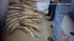 Conservationists Demand Tougher Enforcement Against Ivory Gangs