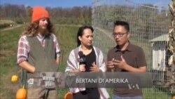 Bertani di Amerika (3)