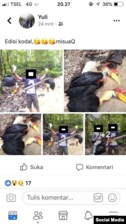 660 Gambar Hewan Rangkong Sulawesi Gratis Terbaik
