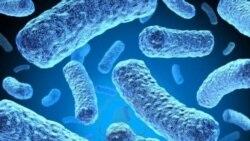 Fighting Multi-Drug Resistant Tuberculosis