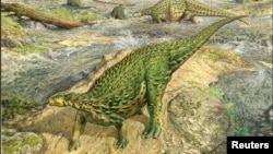 A life reconstruction of the Jurassic Period dinosaur Scelidosaurus, which lived roughly 193 million years ago, is seen in this artist's rendition released by the University of Cambridge August 27, 2020. (John Sibbick/Handout via REUTERS)