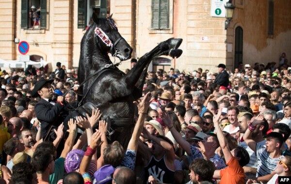 스페인 미노르카(Minorca)섬의 마을에서 열린 '세인트 존' 축제에서 주민들이 말을 만지기 위해 팔을 뻗고 있다.