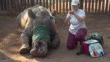 朝鲜的非法贸易网络正在戕害非洲野生动物