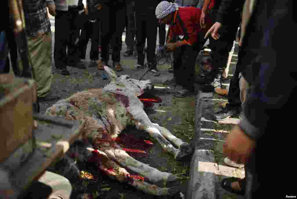Palestinians gather around a donkey, which witnesses said was killed in an Israeli airstrike, northern Gaza Strip, Jan. 19, 2014.