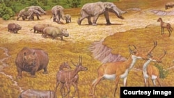 Some of the mammals that roamed North America 2-8 million years ago
