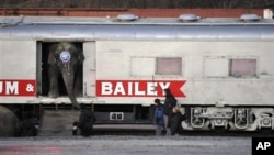 An elephant exits a circus train car before joining the animal walk to the Bi-Lo Center in Greenville, South Carolina, for performances in February