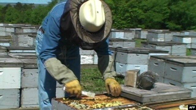 Ekspertja e bletëve nderohet me çmim për ruajtjen e mjedisit