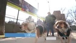 ძაღლების სტილისტი ნიუ-იორკიდან რომელმაც ოცნება აისრულა