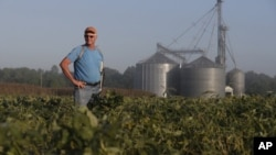 美國印第安那州大豆農田。