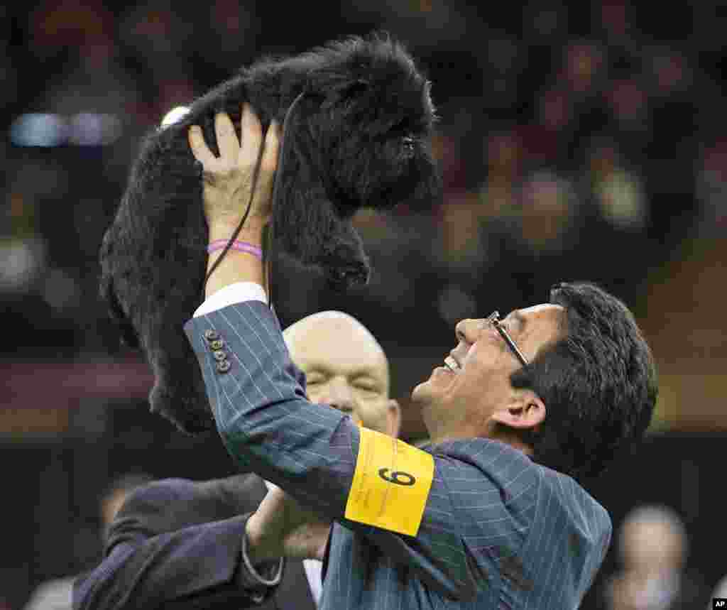 Ernesto Lara celebrates with Banana Joe, an Affenpinscher, who won Best in Show, during the 137th Westminster Kennel Club dog show, February 12, 2013, at Madison Square Garden in New York.